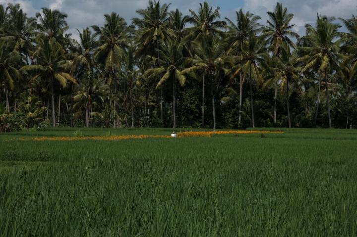 indonesia-26