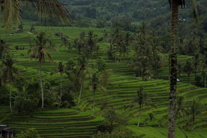 indonesia-46