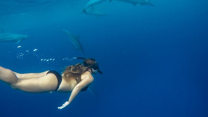 Hayley Sarah Dolphins